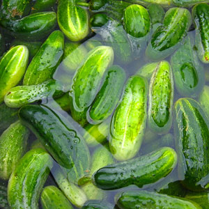 cucumber pickles processed in brine